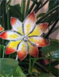 Blume Groß